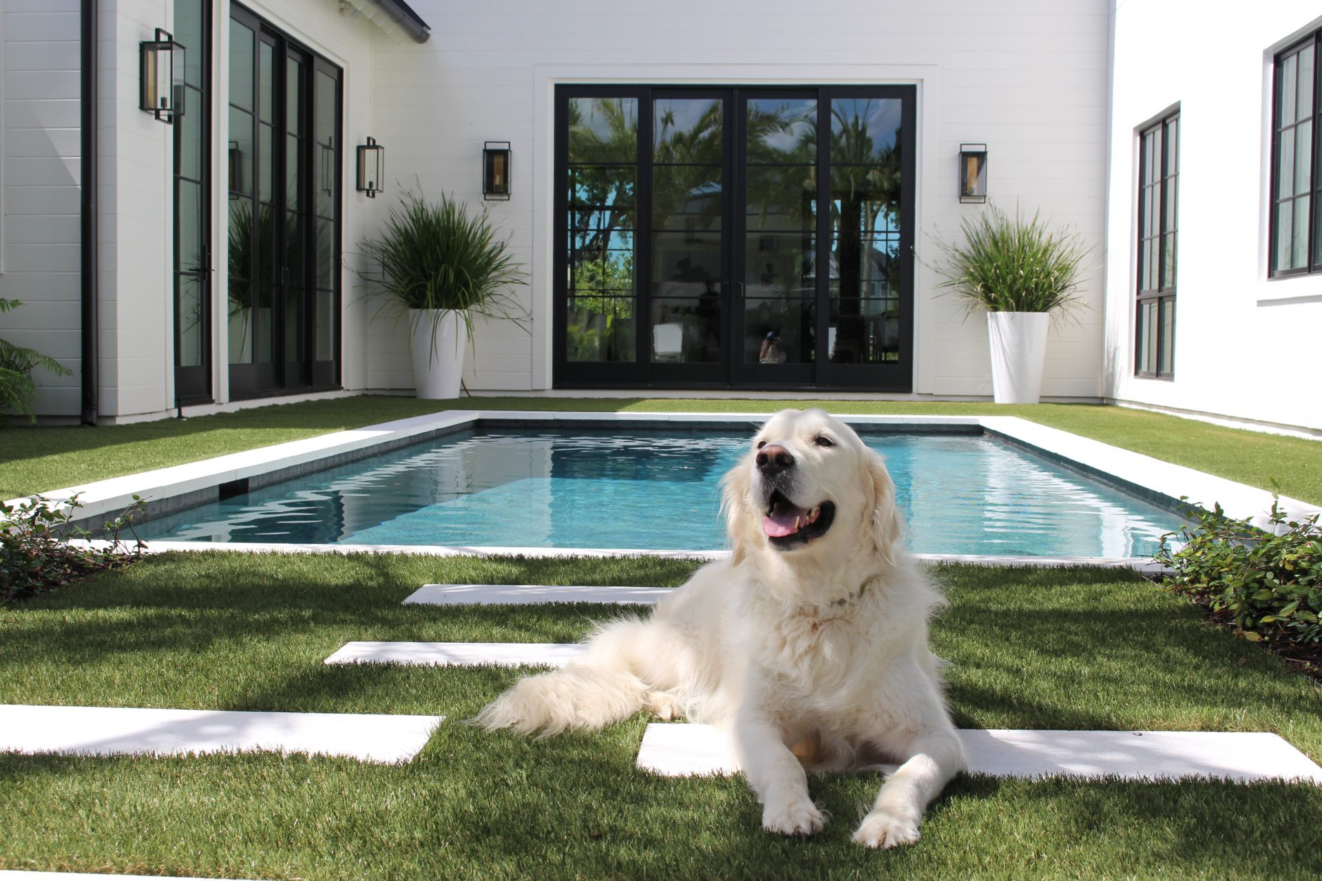 Dog on artificial grass lawn in Charleston, SC